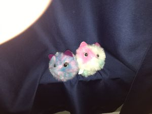 2 Pomsies for Sale in Bernville, PA