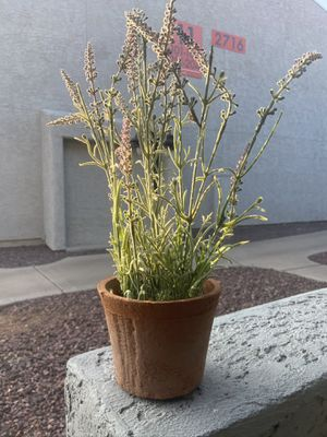 Fake lavender plant with textured terracotta pot for Sale in Scottsdale, AZ
