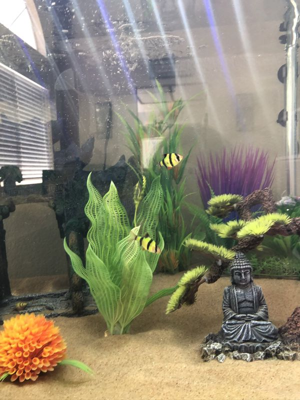 75 gallon fish tank with all decorations/fish included