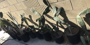 Nolpal. $7 a $9 each 5 gallon for eating / catus plants $7/$9 for Sale in Rancho Dominguez, CA