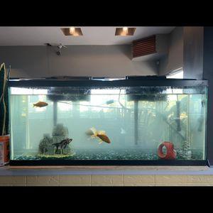 Fish Tank for Sale in Santa Clara, CA