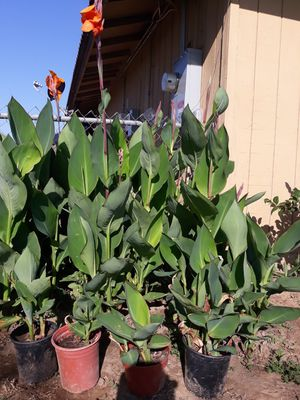 Plants for Sale in Sanger, CA