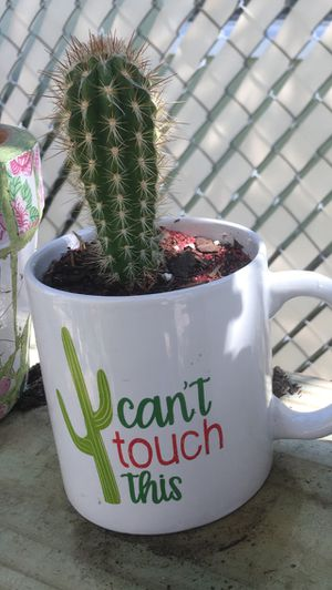 """Cylinder Cactus in """"CAN'T TOUCH THIS MUG"""" for Sale in Kissimmee, FL"""