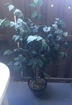 Fake plant for Sale in Highland, CA