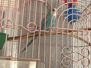 Love bird for Sale in Denver, CO