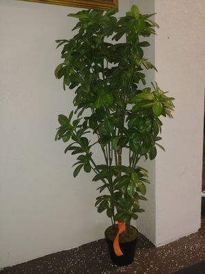 fake plant for Sale in Lutz, FL