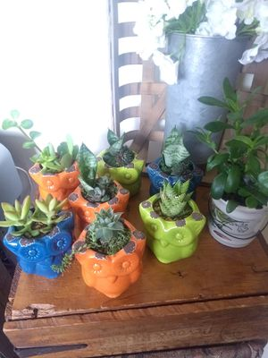 Succulent plants for Sale in Beaver Falls, PA