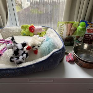 Various Pet Supplies As Shown for Sale in Chicopee, MA
