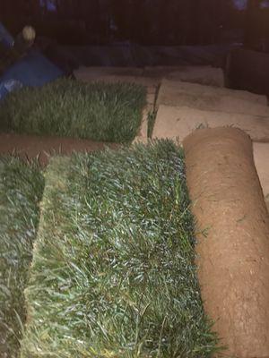 Sod grass for Sale in UPR MARLBORO, MD