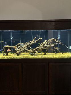 240 Gallon Fish Tank for Sale in Oklahoma City,  OK