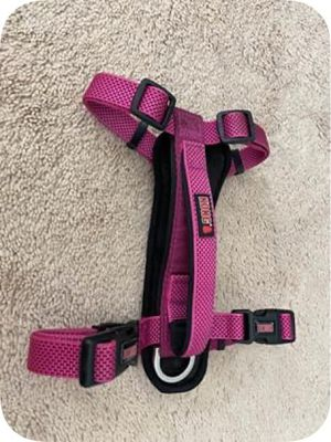 Kong Dog harness and Kong Dog retractable leach for Sale in Glen Burnie, MD