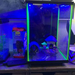 3 Gallon Aquarium Fish Tank / neon Green Edging / Blue LED Cover And Extras for Sale in Phoenix,  AZ