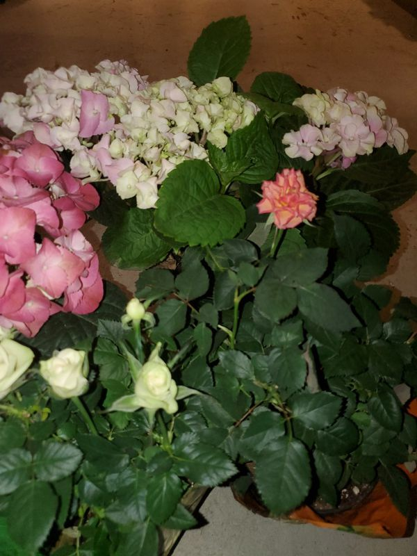 Floral Arrangements, Plant Delivery and Gifts for Special Occasions or Events - Florist / Garden