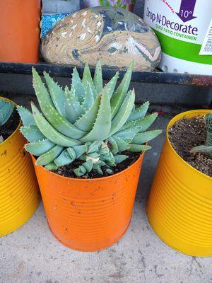Succulent for Sale in Montclair, CA