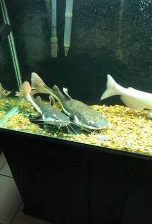 Fish for Sale in Colton, CA