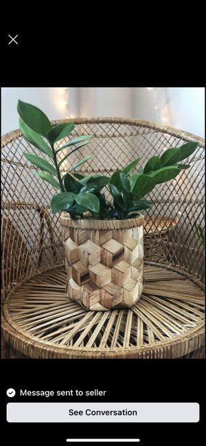Beautiful ZZ plant in wicker basket for Sale in Lutz, FL