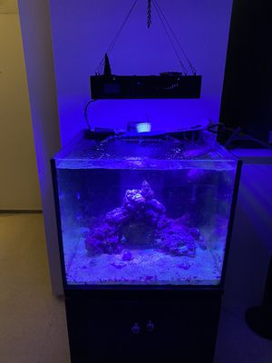 Salt water fish tank 50 gallon with fish for Sale in Worcester, MA