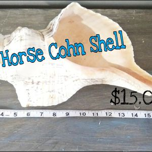 17 Inch Long Horse Cohn Shell for Sale in Cordova, SC