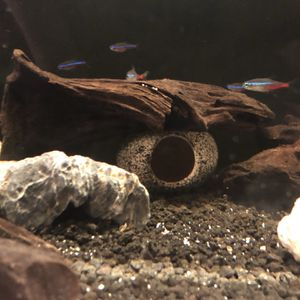 Fish Tank for Sale in Damascus, OR