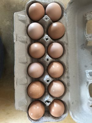 Organic chicken eggs for Sale in New Prague, MN