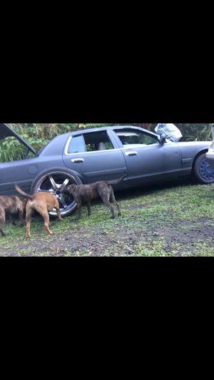 24 inch diablo rims for Sale in Hilo, HI