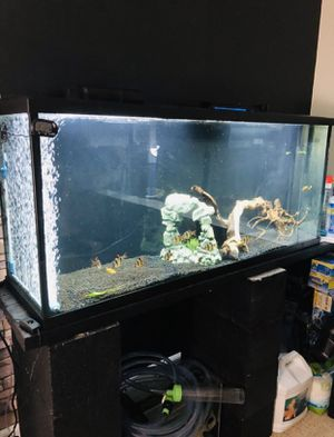 55 gallon fish tank with filter for Sale in Sacramento, CA