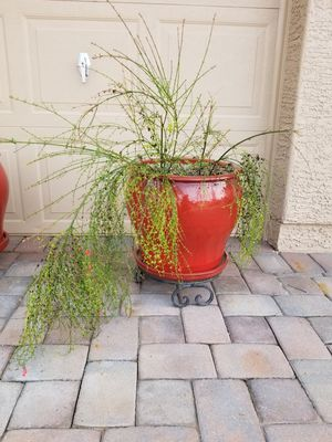 Beautiful Plant Pot with Plant for Sale in Sun Lakes, AZ