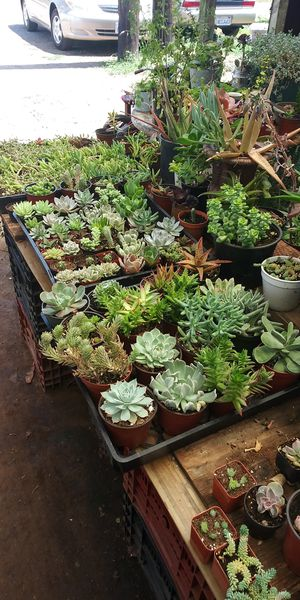 Succulents plants many for Sale in San Marcos, CA