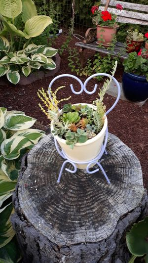Great Gift Miniature Lavender Chair Plant Stand with Cream Clay Pot Succulents Plants Arrangement for Sale in Sumner, WA