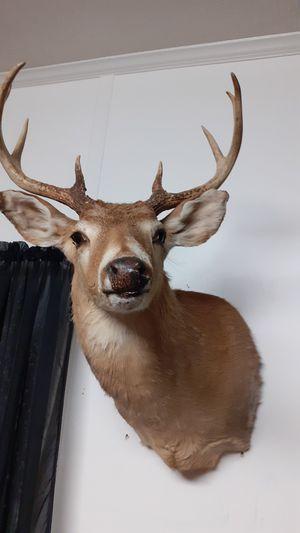 Deer for Sale in Twin City, GA