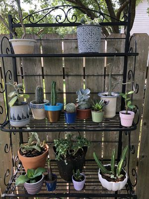 All succulents and cactus in ceramic flower pots $60 for Sale in San Antonio, TX