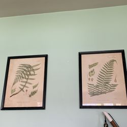 Fern Framed Pictures (set of 2) for Sale in Aurora, IL