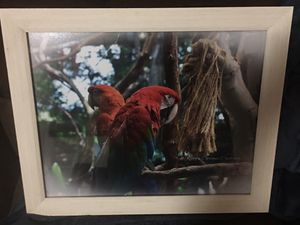 Framed Photography for Sale in Mount Carmel, PA