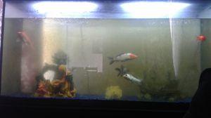 Fish tank for Sale in Brighton, CO