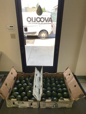 Weekend Sale! 24 Large avocados for $15.00 🇲🇽🥑 (Pick up only) Come in and see us: 1309 Doker Dr Suite A Modesto, Ca 95351 Office: for Sale in Modesto, CA