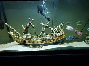 Boat for aquarium for Sale in Orlando, FL
