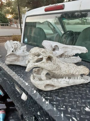 Cow Skull Set for Sale in Marina, CA