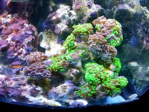 Saltwater Reef Hammer for Sale in Wheaton, IL