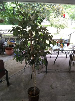 6 foot fake plant for indoor or outdoor use. for Sale in Highlands, TX