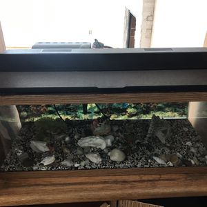 Aquarium for Sale in Kent, WA