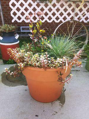 Huge Perennial Porch / Patio Planter Pot for Sale in Warren, MI