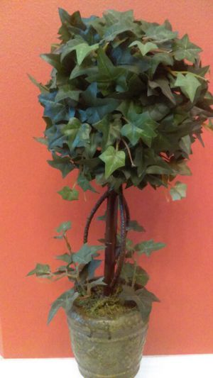 Topiary tree for Sale in Casselberry, FL