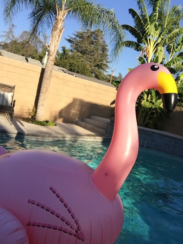 Big Flamingo