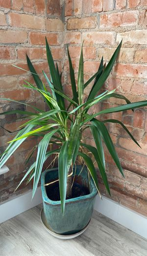 Living room plant & pot for Sale in Salt Lake City, UT