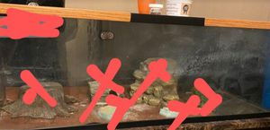 48 x 16 x 17 3/4 Reptile Tank for Sale in Sacramento, CA