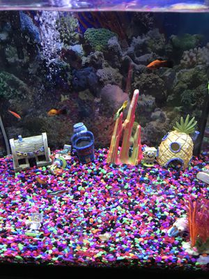 fish tank for Sale in Everett, MA