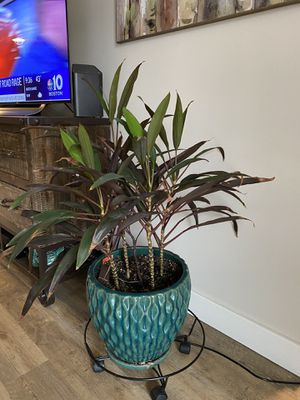 Live house plant for Sale in Tewksbury, MA