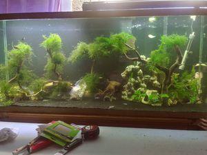 Aquarium for Sale in Oceanside, CA