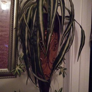 Wall Plant Decor..$50 Both for Sale in Chesapeake, VA