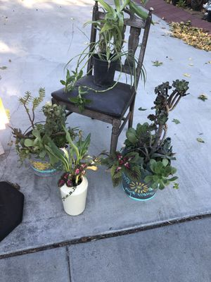 Plant sale today San Fernando from $1 to $12 for Sale in Los Angeles, CA